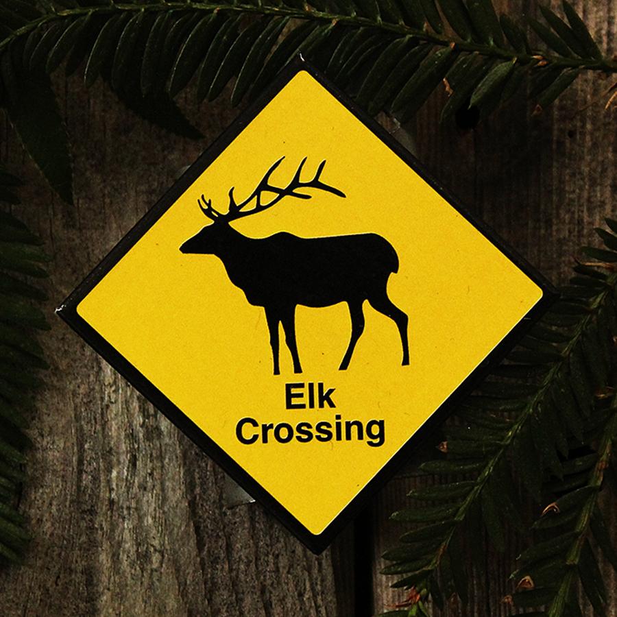 Elk Crossing Magnet