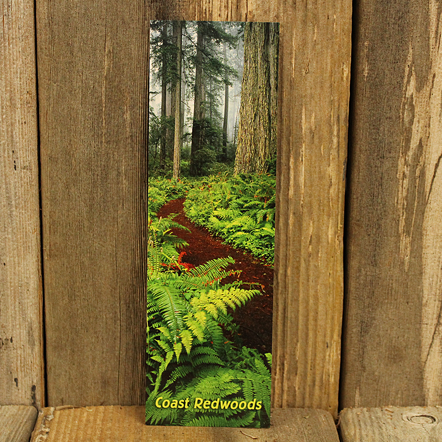 Ferns in the Redwoods Bookmark