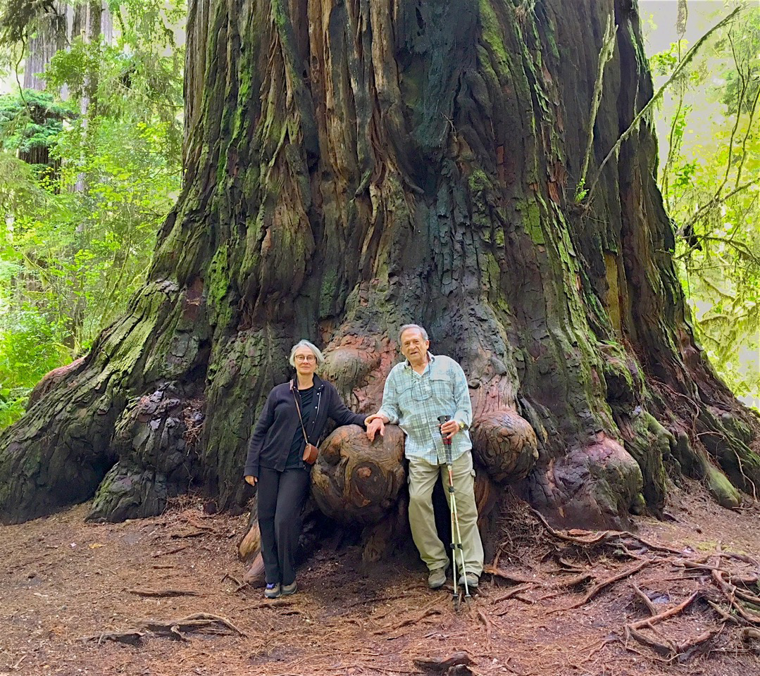 Legacy donors Richard Ross and Linda Carpenter during a visit to the redwoods.