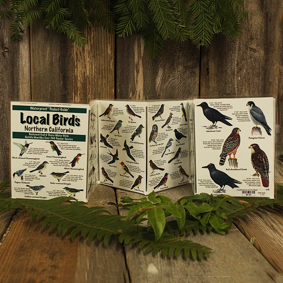Local Birds of Northern California Waterproof Pocket guide with over 200 species