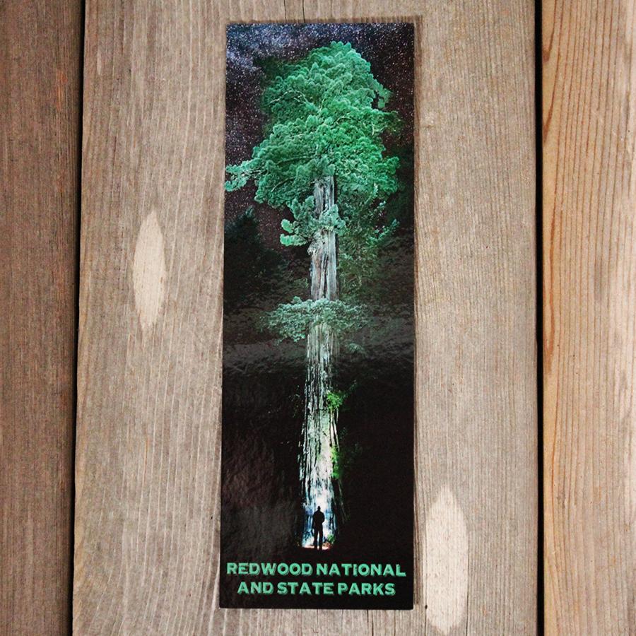 Redwood at Night Bookmark