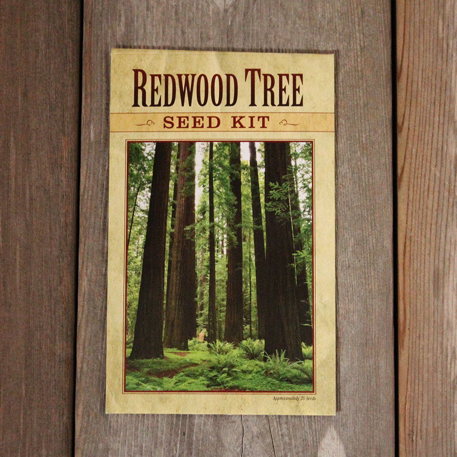 Redwood Tree Seed Kit