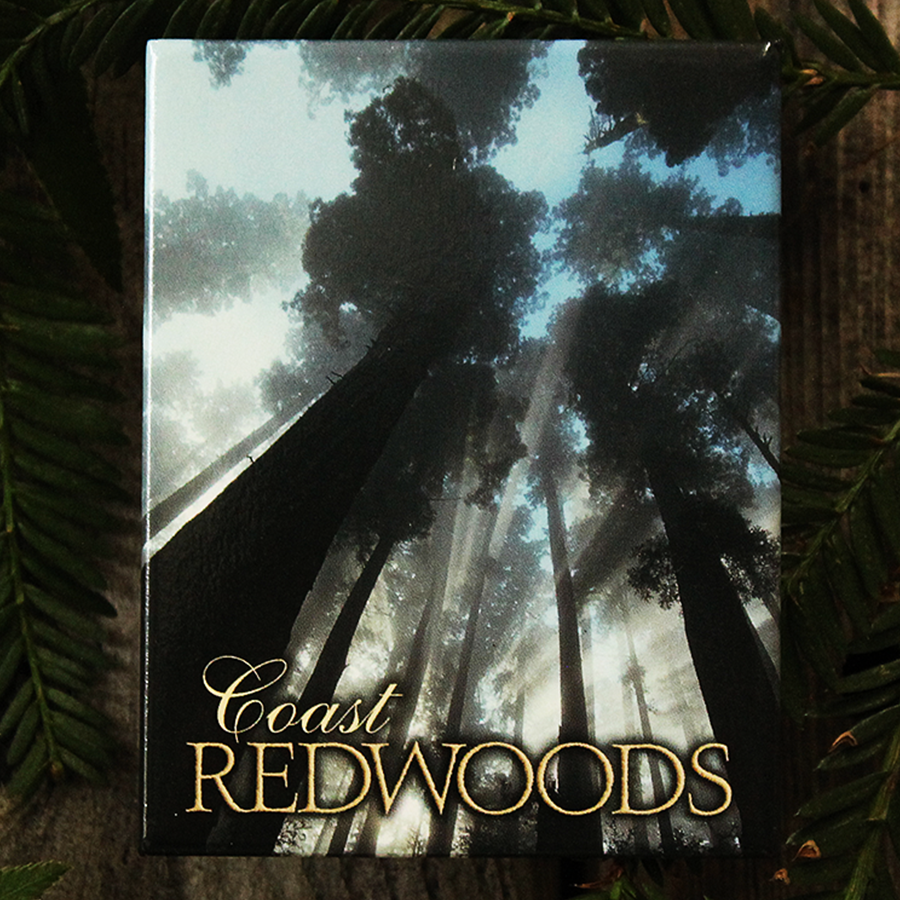 Morning Rapture in the Redwoods Magnet