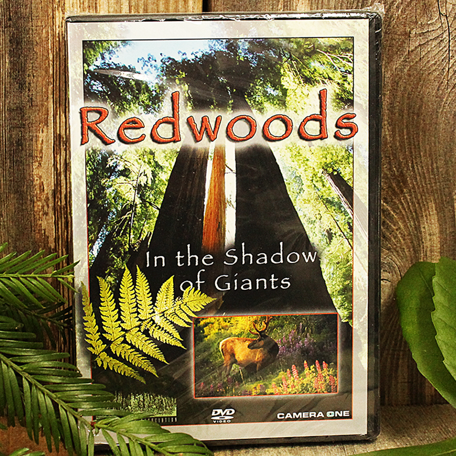 Redwoods In The Shadow of Giants DVD contains 70 minutes of beautiful scenery from throughout the Redwood Forest