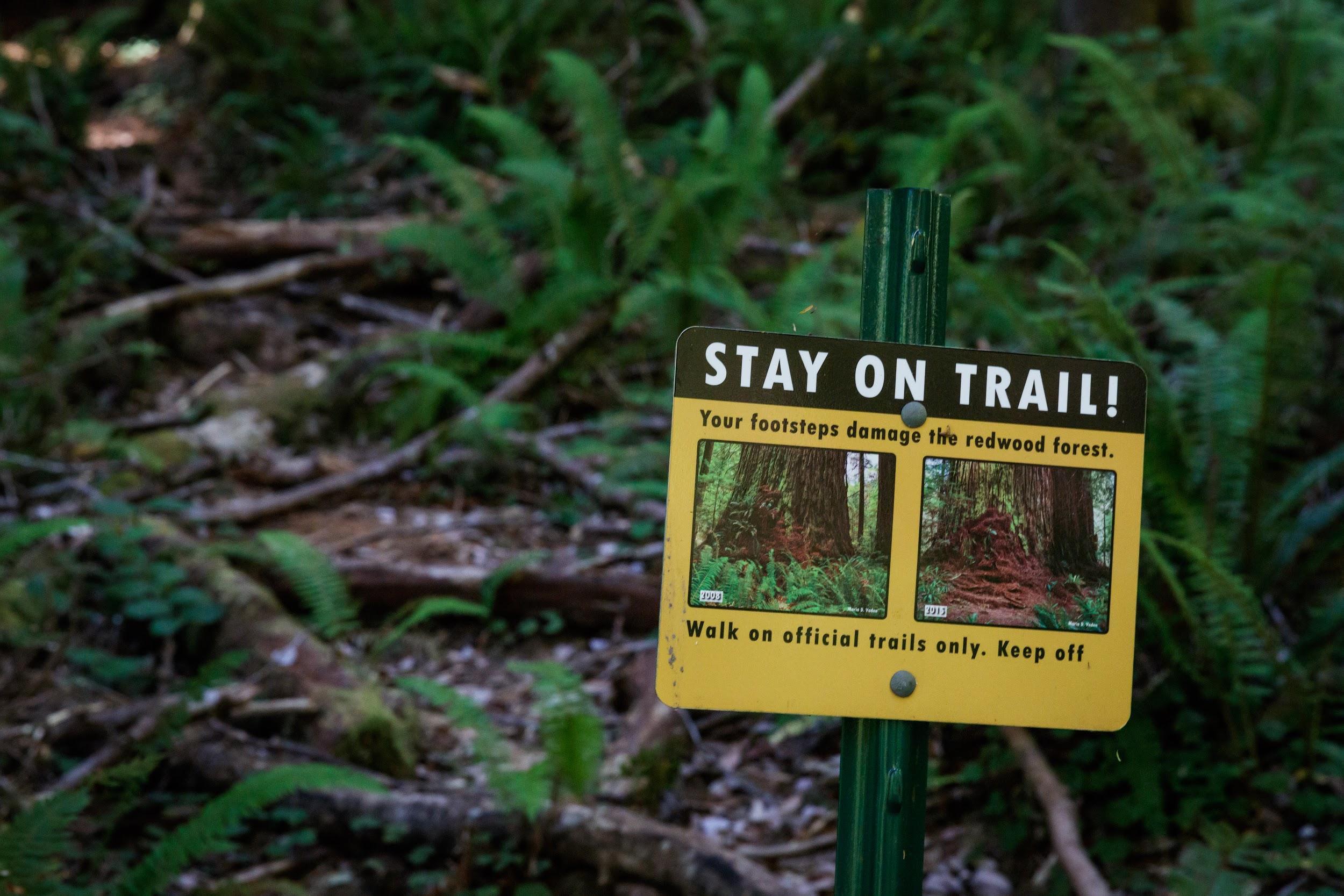 Membership Happenings and Newsletters | Redwood Parks