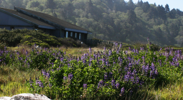 Thomas H. Kuchel Visitor Center, the southern gateway visitor center for Redwood National and State Parks