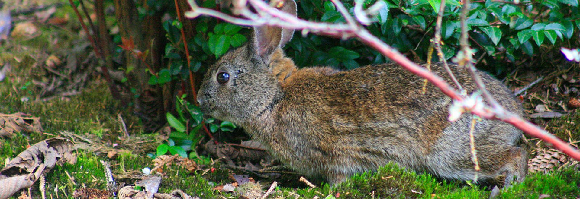 Brush Bunny