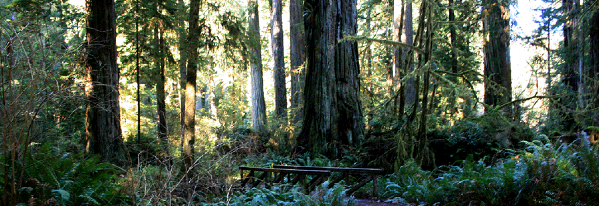 cathedral trees trail