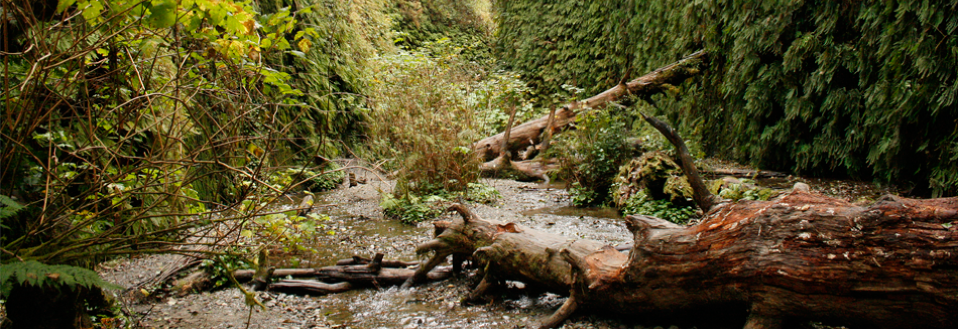 Fern Canyon in Prairie Creek Redwoods State Park