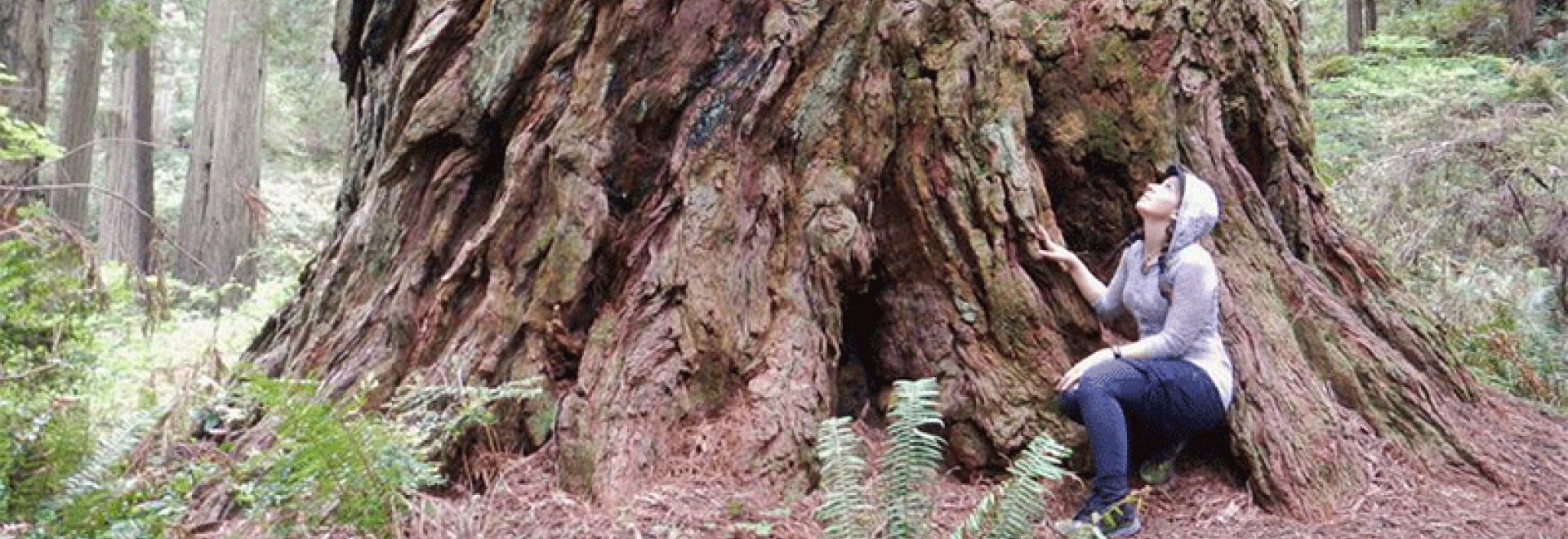 Young woman enjoying one of the massive old redwoods of Del Norte Redwoods State Park