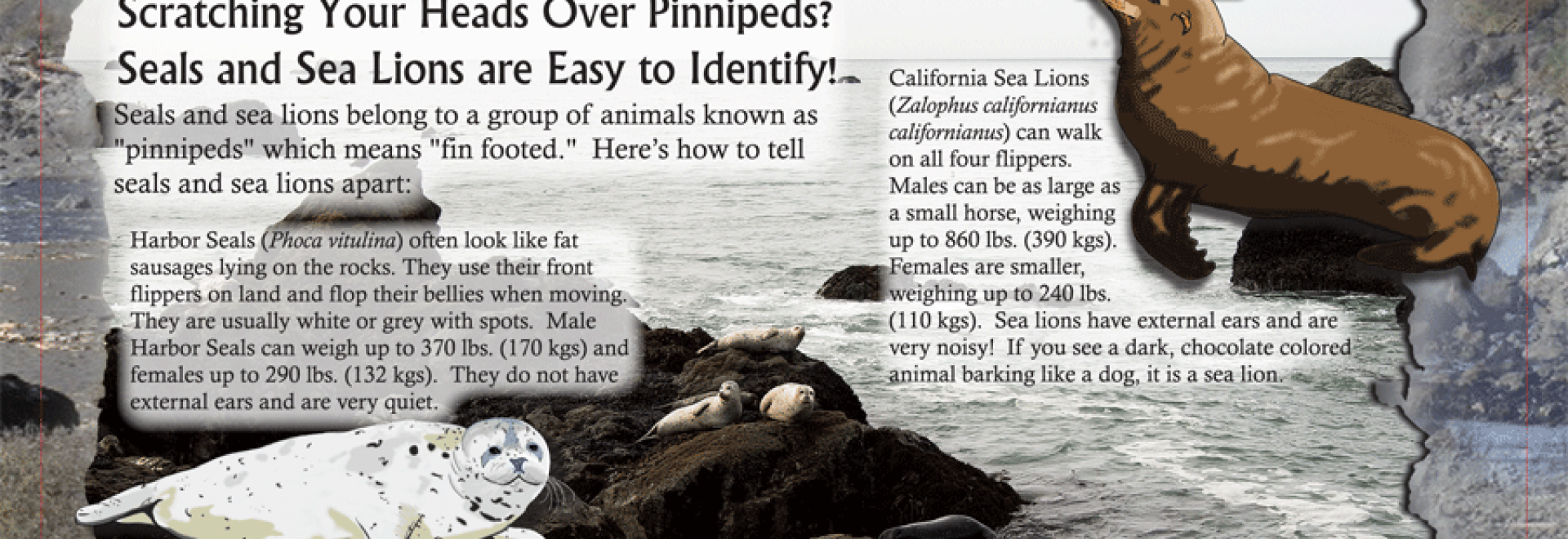 Seal Sea Lion sign