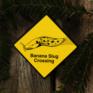Banana Slug Crossing Magnet