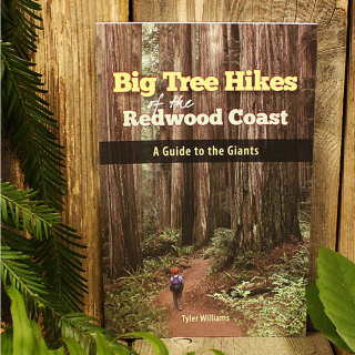 Big Tree Hikes of the Redwood Coast
