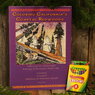 Coloring California's Coastal Redwoods