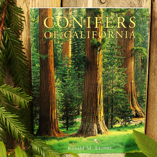 Conifers of California