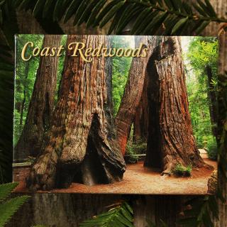 Redwood Goosepens Magnet