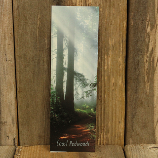 Redwood Trail Bookmark