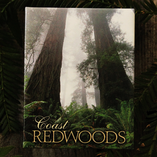 Coast Redwoods in Fog Magnet