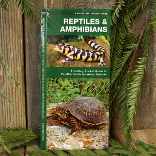 Reptiles and Amphibians Pocket Guide