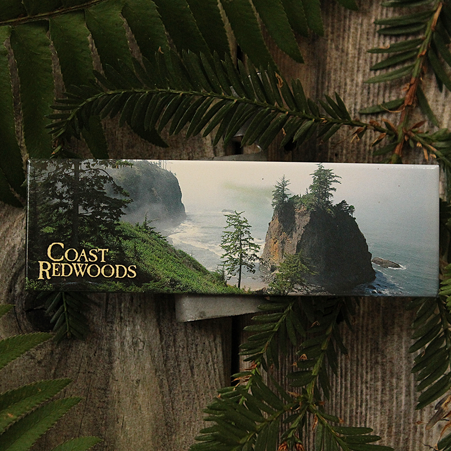 Coastal Majesty Redwoods Magnet